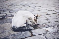 Törstig övergiven katt royaltyfri fotografi