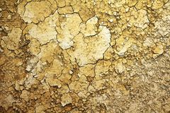 Törstig jordning Royaltyfria Bilder