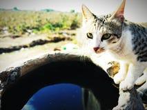 törstig katt arkivbilder