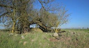 Túmulo megalítico arruinado perto de Zastrow bruto em Alemanha fotos de stock