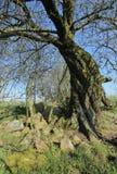Túmulo megalítico arruinado perto de Zastrow bruto em Alemanha imagens de stock