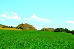 Túmulos celtas no platô de Transylvanian, Romênia Paisagem verde nos plenos verões em um dia ensolarado Imagens de Stock Royalty Free