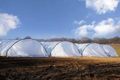 Túneis da estufa feitos do plástico do polietileno em seguido em um agri Fotos de Stock Royalty Free