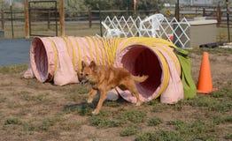 Túnel agiliy del perro Foto de archivo