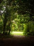 Túnel através das árvores fotos de stock royalty free