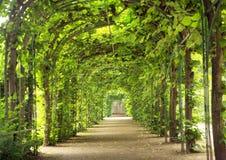 Túnel bonito feito das árvores Fotos de Stock Royalty Free