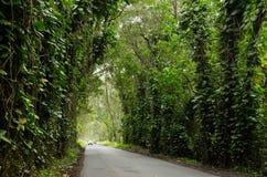 Túnel da árvore Imagem de Stock