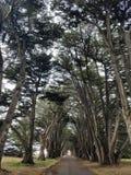 Túnel da árvore Fotografia de Stock