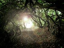 Túnel da árvore Fotos de Stock Royalty Free