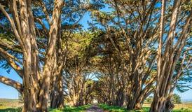 Túnel da árvore de Cypres no litoral do nacional de Reyes do ponto fotografia de stock