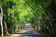 Túnel da árvore na proibição Krang, parque nacional de Kaeng Krachan, Phetchaburi fotografia de stock