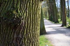 Túnel da estrada secundária do borrão de árvores verdes na luz solar Imagens de Stock