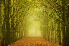 Túnel da luz Imagem de Stock Royalty Free