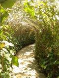 túnel da planta fotografia de stock