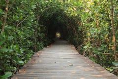 Túnel das árvores Imagens de Stock