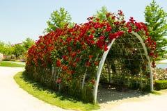 Túnel das rosas Fotos de Stock