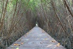 Túnel de árboles Foto de archivo libre de regalías