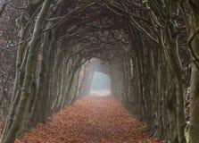 Túnel de árboles Fotografía de archivo libre de regalías