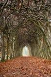Túnel de árboles Imagen de archivo