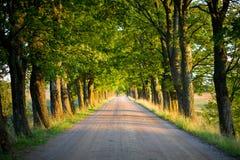Túnel de árboles Fotos de archivo libres de regalías