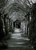 Túnel de árboles Foto de archivo