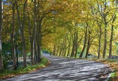 Túnel de árboles - curva del otoño del camino fotos de archivo libres de regalías