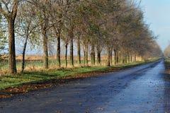 Túnel de árboles verdes en luz del sol Imagen de archivo libre de regalías