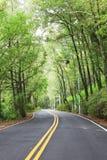Túnel de árboles verdes en luz del sol Fotografía de archivo libre de regalías