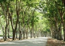 Túnel de árvores verdes Imagens de Stock Royalty Free