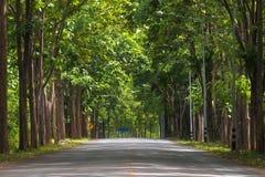 Túnel de árvores verdes na luz solar Foto de Stock Royalty Free