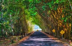 Túnel de bambú Fotografía de archivo