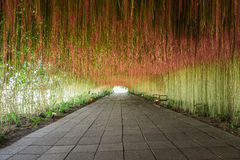 Túnel de la flor fotos de archivo