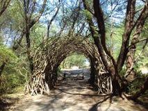 túnel de la raíz Imagen de archivo libre de regalías