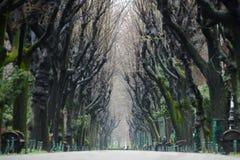 Túnel de los árboles Foto de archivo libre de regalías