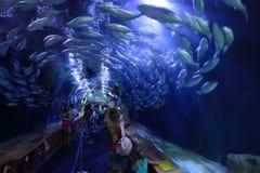 Túnel de vidro em L'Oceanografic, Valência imagem de stock