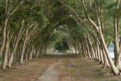 Túnel del árbol Fotografía de archivo libre de regalías