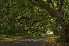 Túnel del árbol Imagen de archivo libre de regalías
