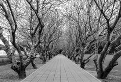 Túnel del árbol Foto de archivo libre de regalías