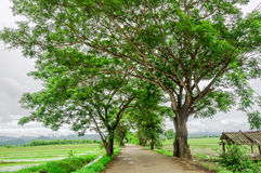 Túnel del árbol imagen de archivo