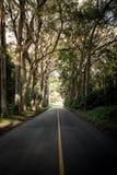 Túnel del árbol Foto de archivo