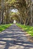 Túnel del árbol de ciprés de Monterey Foto de archivo libre de regalías