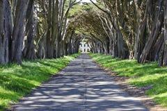 Túnel del árbol de ciprés de Monterey Fotografía de archivo