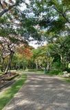 Túnel del árbol de la flor de pavo real en el parque Fotos de archivo