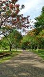Túnel del árbol de la flor de pavo real en el parque Foto de archivo
