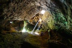 Túnel del árbol de la secoya gigante Fotografía de archivo