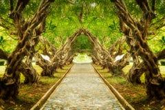 Túnel del árbol del Plumeria imágenes de archivo libres de regalías