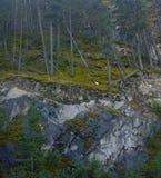 Túnel del árbol en Banff Canadá fotografía de archivo libre de regalías