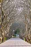 Túnel del árbol en parque Imagen de archivo libre de regalías