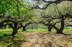 Túnel del árbol y sombra del árbol en parque imagen de archivo