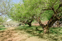 Túnel del árbol y sombra del árbol en parque fotos de archivo libres de regalías